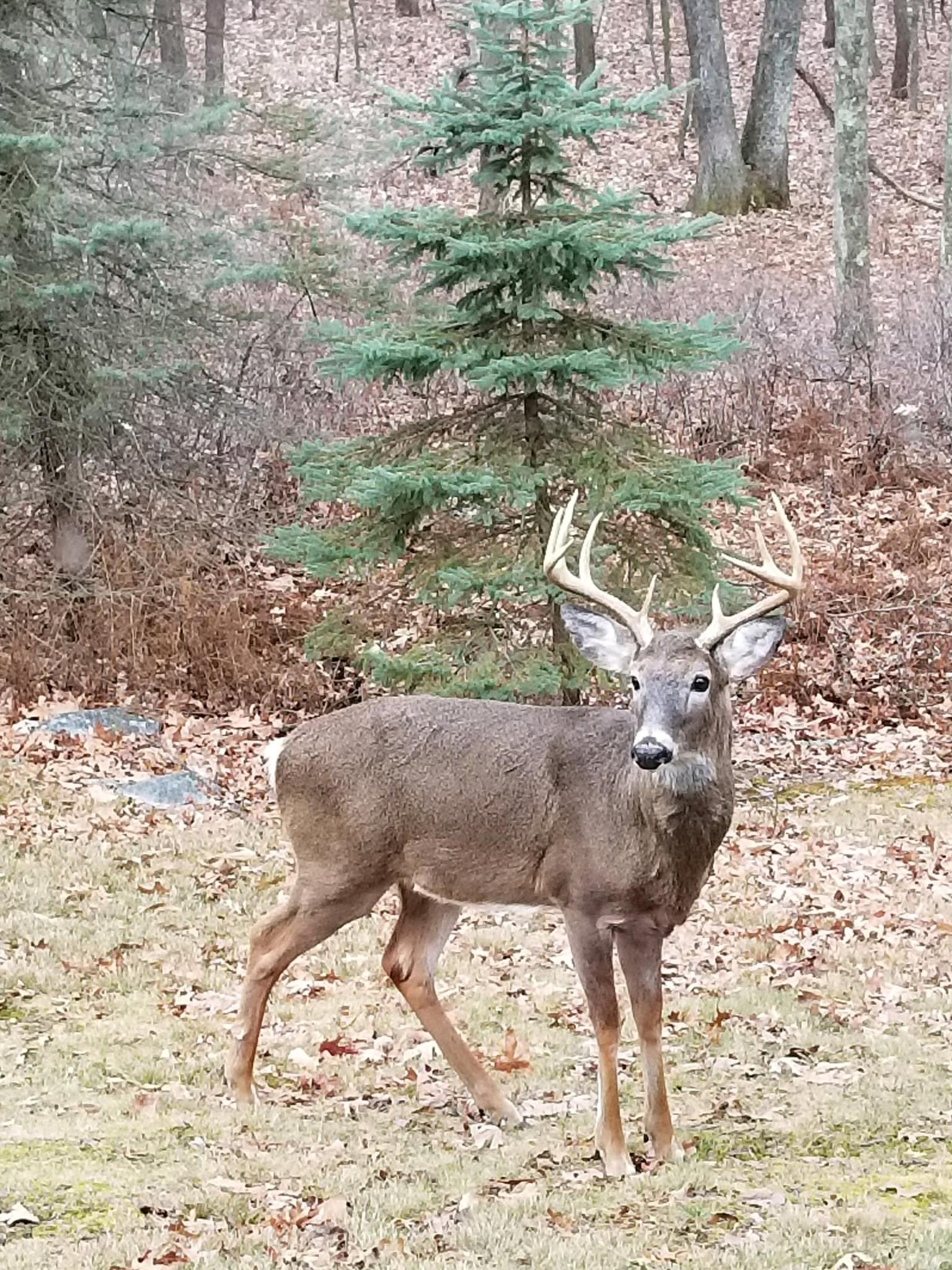 PGC approves changes for deer seasons; officially adds ...